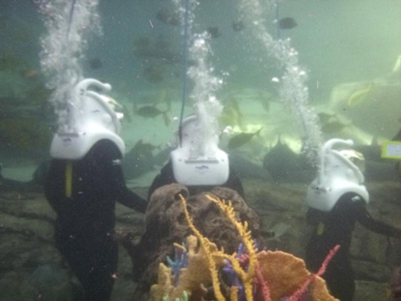 Walking underwater Discovery Cove SeaVenture