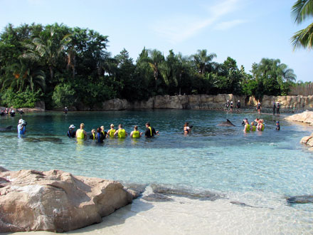 Planning the Perfect Day at Discovery Cove
