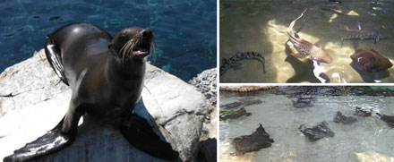 Stingrays, Sea Lions and Sharks
