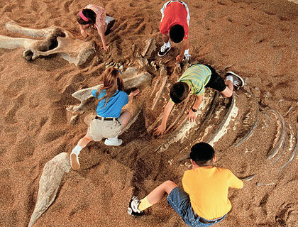 Dinoland digging