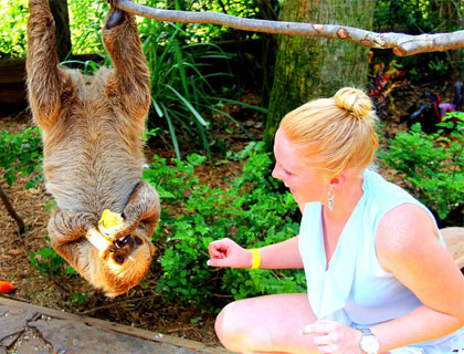 Young woman squatting next to a sloth which's hanging head down from a branch