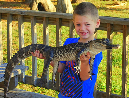 Young boy in a blue t-shirt holding a baby gator