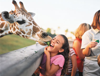 Giraffe kissing little girl's face