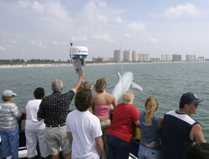 People on dolphin watching boat trip in Clearwater Florida