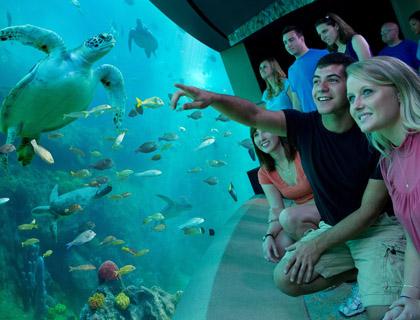 Group of people watching the turtles in Turtle Trek at SeaWorld Orlando