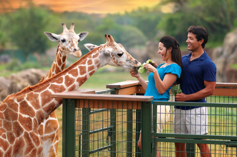 The Top Busch Gardens Rides Voted For By You