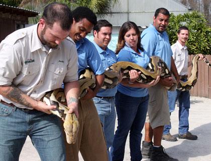 Gatorland staff holding a snake