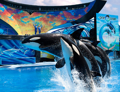 Shamu Show One Ocean at SeaWorld