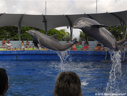 Dolphin Show at the Miami Seaquarium