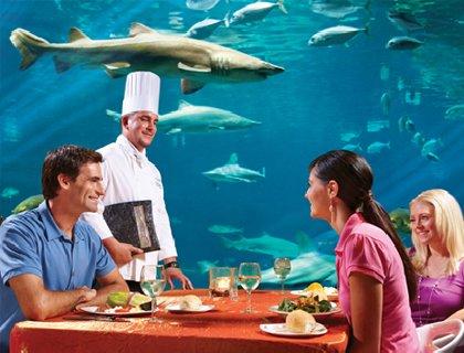 Shark Grill Restaurant at SeaWorld