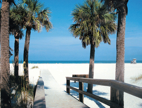 Palm trees, surrounding a path, leading to Clearwater Beach