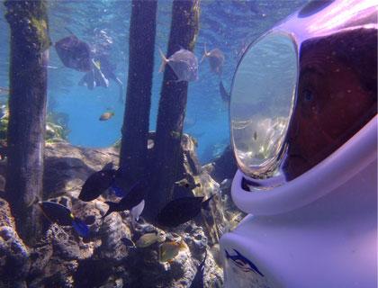 Underwater View at SeaVenture