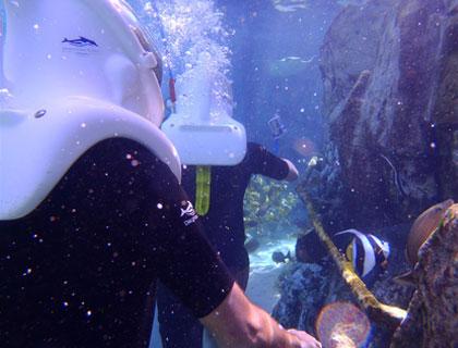 Underwater Walkway