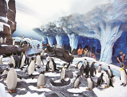 Beluga Experience at SeaWorld