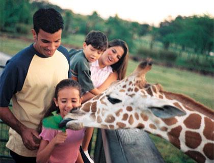 Family of four feeding a giraffe on the Serengeti Safari