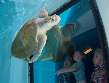 Meeting turtles at Clearwater Aquarium
