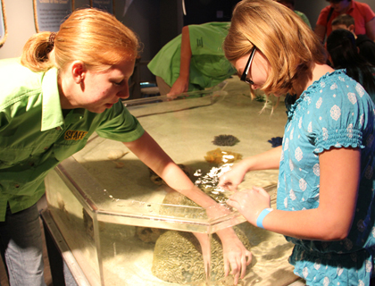 Touch tanks at Clearwater Marine Aquarium