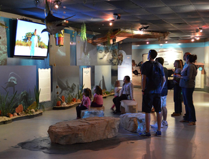exhibits at Clearwater aquarium